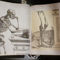 An engraving of an annotated skeleton leans against a pedestal.